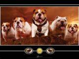 bulldogs miss st