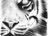LSU-tiger.jpg